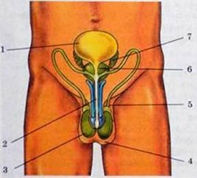 zhenskie-genitalii-v-sperme-foto-possorilis-na-semkah-mineta-onlayn