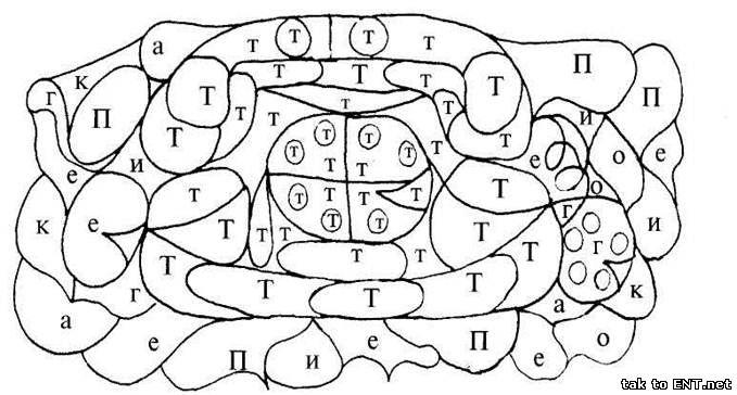 Буква Т | Алфавит самостоятельные задания | Начальные классы: http://tak-to-ent.net/load/175-1-0-2108